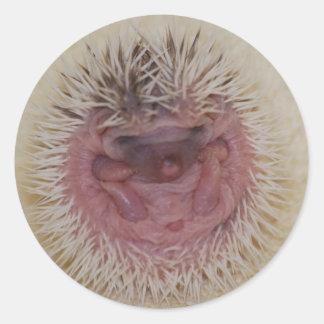 Baby Hedgehog Ball Classic Round Sticker