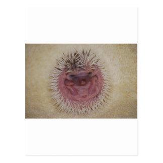 Baby Hedgehog Ball Postcard