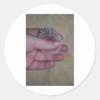 Baby Hedgehog in Hand Classic Round Sticker