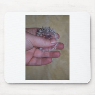 Baby Hedgehog in Hand Mouse Pad