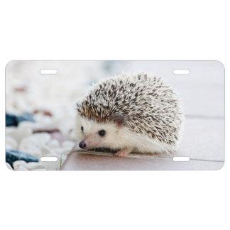 Baby Hedgehog License Plate