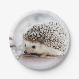 Baby Hedgehog Paper Plate