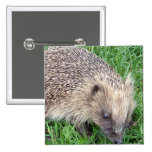 Baby Hedgehog Pin