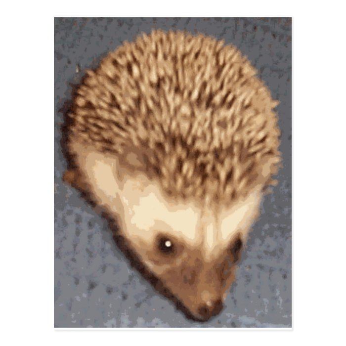 baby hedgehog postcard
