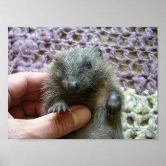 Baby Hedgehog Print