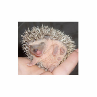 Baby Hedgehog Sculpture Standing Photo Sculpture