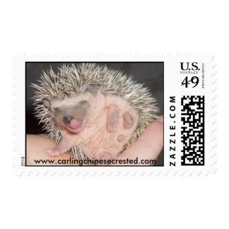 Baby Hedgehog Stamp