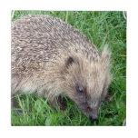 Baby Hedgehog Tile