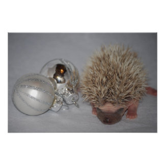 Baby Hedgehog with Christmas Ornament Poster