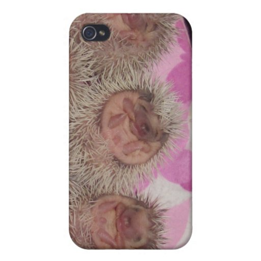 Baby hedgehogs iPhone 4 cover