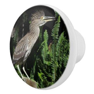 Baby Heron Bird Wildlife Animals Knob