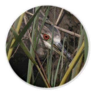 Baby Heron Bird Wildlife Animals Wetlands Knob