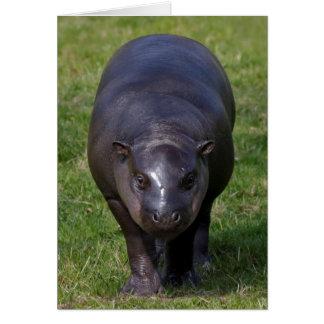 Baby Hippo Card