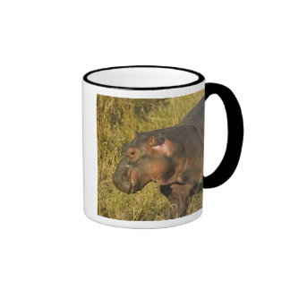 Baby Hippo out of water away from adults along Coffee Mug