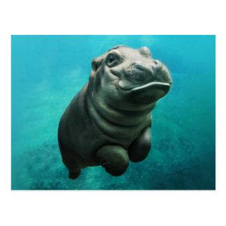 Baby Hippopotamus Swimming Postcard