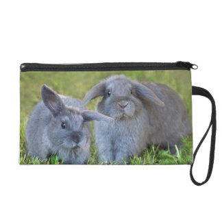Baby Holland Lop Bunnies - Cute Rabbits Wristlet Clutch