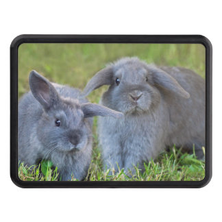 Baby Holland Lop Bunnies - Cute Rabbits Hitch Cover