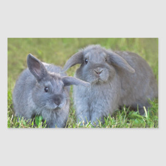 Baby Holland Lop Bunnies - Cute Rabbits Rectangular Sticker