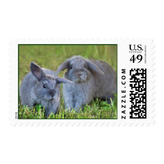 Baby Holland Lop Bunnies - Cute Rabbits Stamp