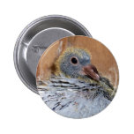 Baby Homing Pigeon Button