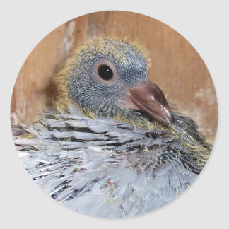 Baby Homing Pigeon Stickers