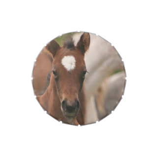 Baby Horse Candy Tin