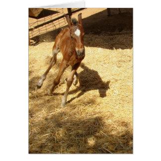 Baby Horse Colt Card