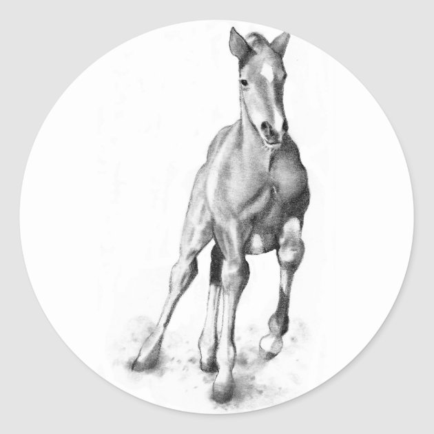 Baby Horse Colt Running Pencil Art Classic Round Sticker Zazzle Com