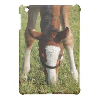 Baby Horse Foal grazing in pasture iPad Mini Case