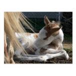 Baby Horse Postcard