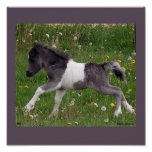 Baby Horse Poster