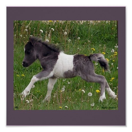 Baby Horse Poster #2