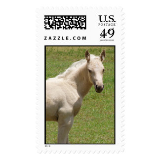 baby horse stamps
