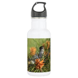 Baby Hummingbird Being Fed Water Bottle