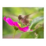 Baby Hummingbird Postcard