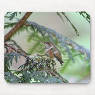 Baby Hummingbird Sticking Out Its Tongue Mouse Pad