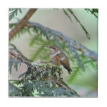 Baby Hummingbird Sticking Out Its Tongue Small Square Tile