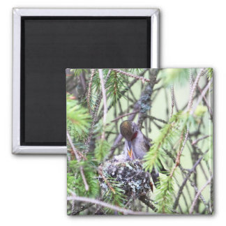 Baby Hummingbirds in a Nest Refrigerator Magnets