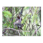 Baby Hummingbirds in a Nest Postcard