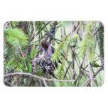 Baby Hummingbirds in a Nest Rectangular Magnet