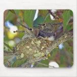 Baby hummingbirds - Mousepad
