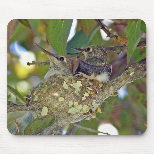 Baby hummingbirds - Mousepad