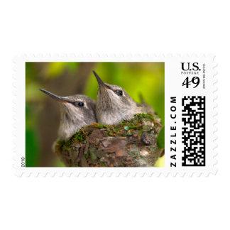 Baby hummingbirds postage stamps