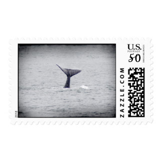 Baby Humpback Whale Stamp