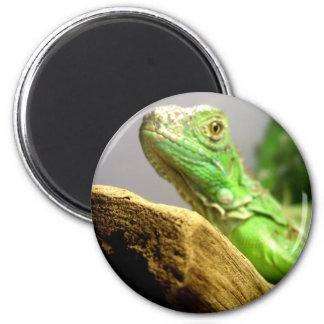 Baby Iguana Magnet