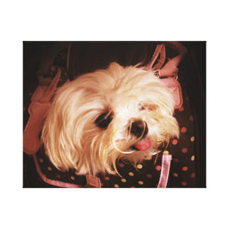 Baby in a Bag Maltese Puppy WRAPPED CANVAS