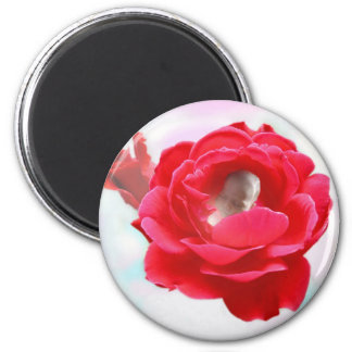 Baby in a Rose Magnet