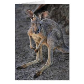 Baby Joey Red Kangaroo Card