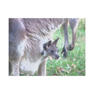 Baby Kangaroo in Pouch Canvas Print