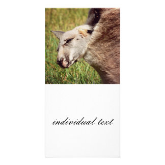 baby kangaroo photo card